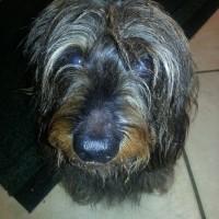 Armadillo Pets, Surrey - Image 4