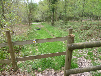 Forest dog walk near Chepstow, Wales - Driving with Dogs