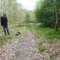 Forest dog walk near Chepstow, Wales - Dog walks in Wales