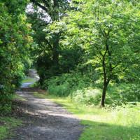 Jacksons bank dog walk, Staffordshire - Dog walks in Staffordshire