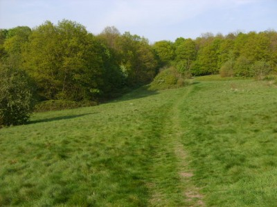 Bedfords Park dog walk, Essex - Driving with Dogs