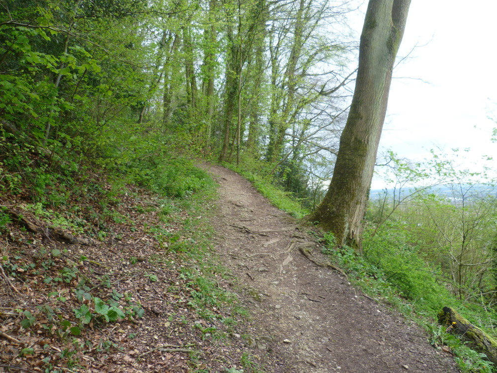 A46 hillside dog walk, Gloucestershire - Dog walks in Gloucestershire