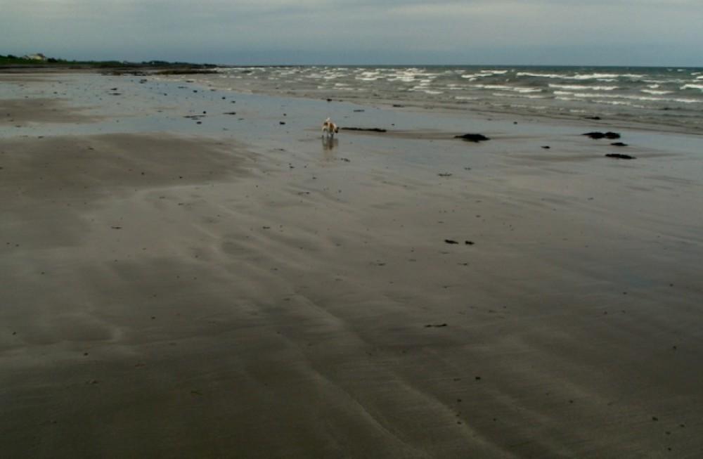 Ballyhalbert dog-friendly beach, NI - Dog walk in Northern Ireland
