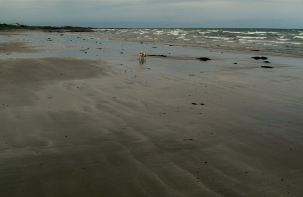 Ballyhalbert dog-friendly beach, NI - Dog walk in Northern Ireland