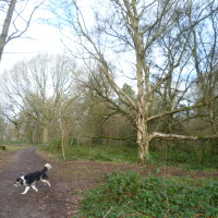 Kenilworth woodland walk, Warwickshire - Dog walks in Warwickshire