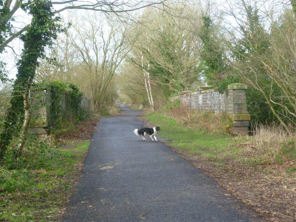 Kenilworth woodland walk, Warwickshire - Dog walks in Warwickshire