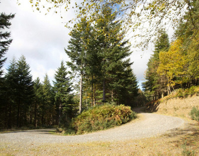 Woodland dog walk near Enniskerry, RoI - Driving with Dogs