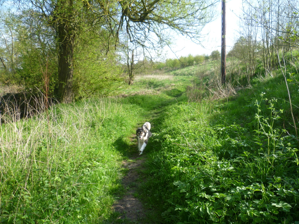 M42 Hopwood Services dog walk, Worcestershire - Dog walks in Worcestershire