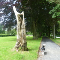 A470 Builth Wells dog walk, Wales - Dog walks in Wales