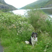 Dog walk near Rhayader, Wales - Dog walks in Wales