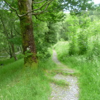 Penbont dog walk, Powys, Wales - Dog walks in Wales