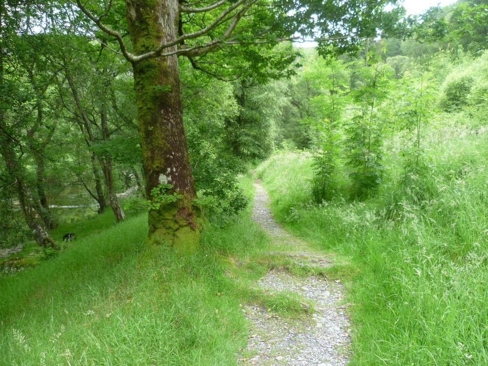Reservoir dog walk, Powys, Wales - Dog walks in Wales