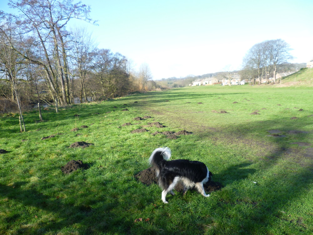 Saltaire local dog walk, Yorkshire - Dog walks in Yorkshire