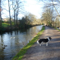 Airedale Greenway dog walk, Yorkshire - Dog walks in Yorkshire