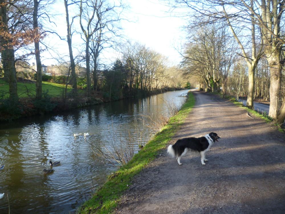 Airedale Greenway dog walk, Yorkshire - Dog walks in Yorkshire