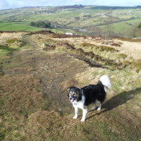 Penistone Hill dog walk, Haworth, Yorkshire - Dog walks in Yorkshire