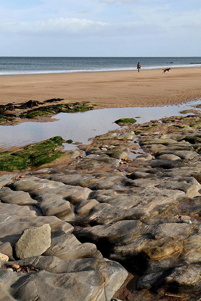 Spittal dog-friendly beach, Northumberland - Dog walks in Northumberland