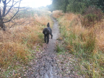 A48 lakeside dog walk near Ammanford, Wales - Driving with Dogs