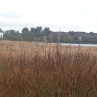 A48 lakeside dog walk near Ammanford, Wales - Dog walks in Wales