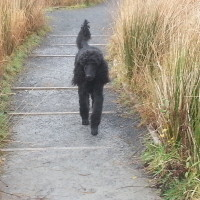 A48 lakeside dog walk near Ammanford, Wales - Dog walks in Wales
