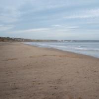Reighton Sands dog-friendly beach, Yorkshire - Dog walks in Yorkshire