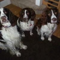 The Dog Hitch, Dorset - Image 3