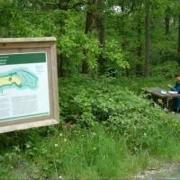 Woodland walk by the River Avonmore, RoI - Dog walks in Ireland
