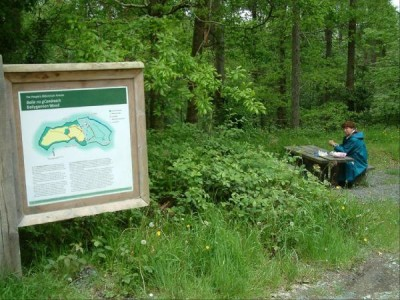 Woodland walk by the River Avonmore, RoI - Driving with Dogs