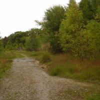 Woodland dog walk near Durrow, RoI - Dog walks in Ireland