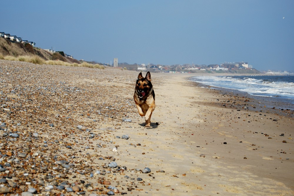 Pakefield dog-friendly beach, Lowestoft, Suffolk - Dog walks in Suffolk