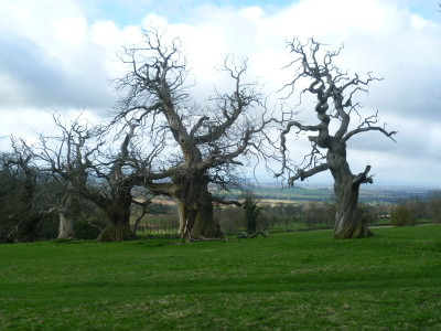 Castle Walks near Yarpole, Herefordshire - Driving with Dogs