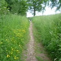 Welcombe Hills dog walk near Stratford, Warwickshire - Dog walks in Warwickshire