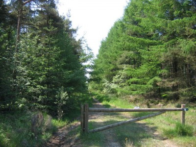 Forest dog walks near Pickering, North Yorkshire - Driving with Dogs