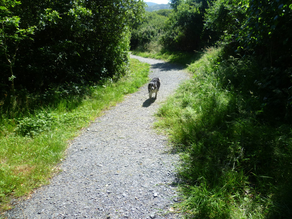 Barmouth dog walk, Gwynedd, Wales - Dog walks in Wales