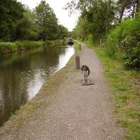 Stratford-upon-Avon canal dog walk, Warwickshire - Dog walks in Warwickshire