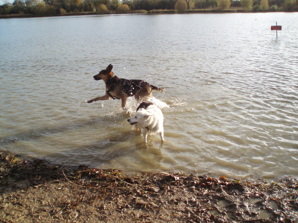 Hinchingbrooke Country Park dog walks, Cambridgeshire - Dog walks in Cambridgeshire