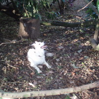 Hinchingbrooke Country Park dog walks, Cambridgeshire - Dog walks in Cambridgeshire