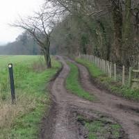 Telegraph Farm dog walk, Kent - Dog walks in Kent