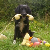 Fun With Dogs, Hampshire - Image 1