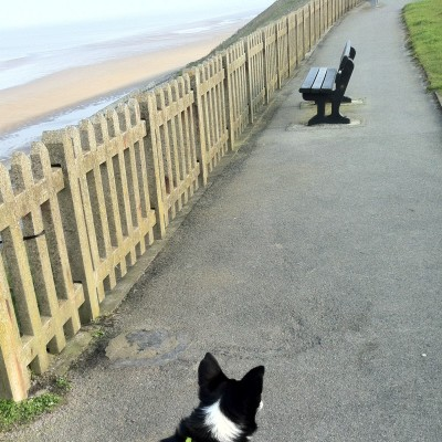 Bispham dog-friendly beach Blackpool, Lancashire - Driving with Dogs