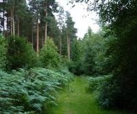 Dudmaston Estate dog walks, Shropshire - Dog walks in Shropshire