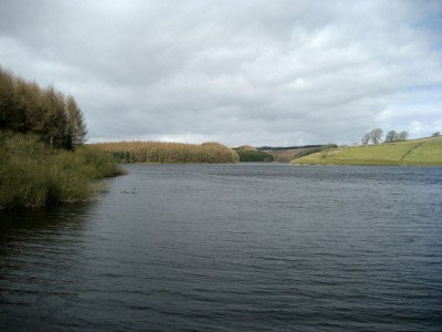 Remote Reservoir dog walk, Yorkshire - Driving with Dogs