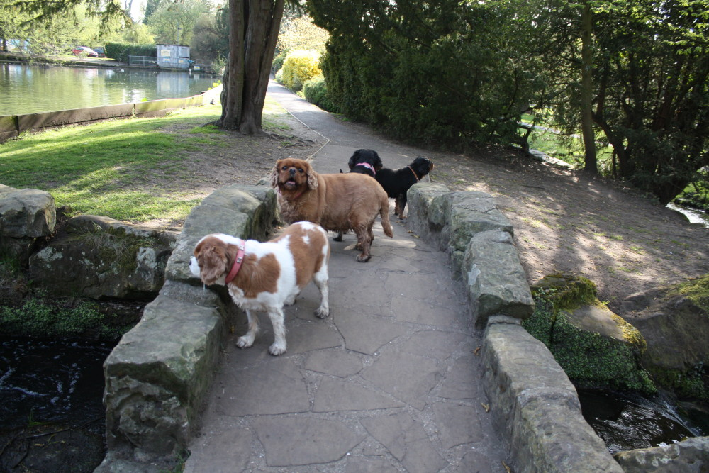 Beddington Park dog walk, Surrey - Dog walks in Surrey