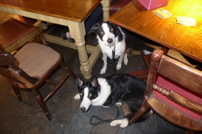 Formby dog-friendly pub and beaches, Merseyside - Driving with Dogs