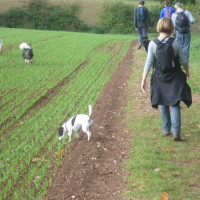 Explore by Paw dog walking group, Warwickshire - Dog walks in Warwickshire