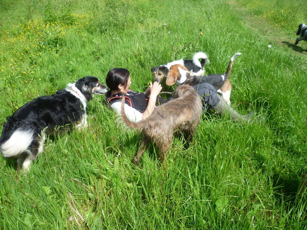 Explore by Paw dog walking group, Warwickshire - Dog walks in Warwickshire