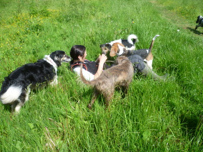 Explore by Paw dog walking group, Warwickshire - Driving with Dogs