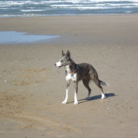Llyn Peninsula dog-friendly beach at Nefyn, Wales - Dog walks in Wales