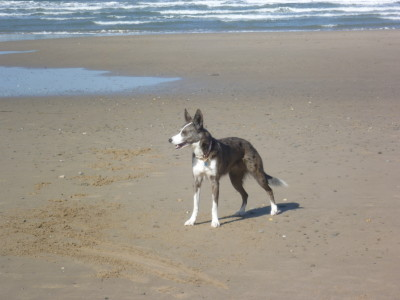 Llyn Peninsula dog-friendly beach, Wales - Driving with Dogs
