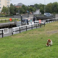 A82 dog walk from Bowling near Dumbarton, Scotland - Dog walks in Scotland